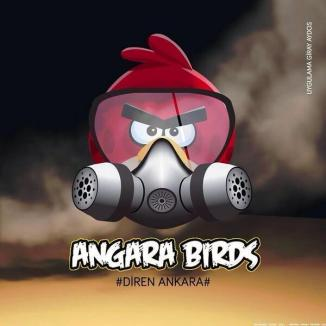 angara_birds